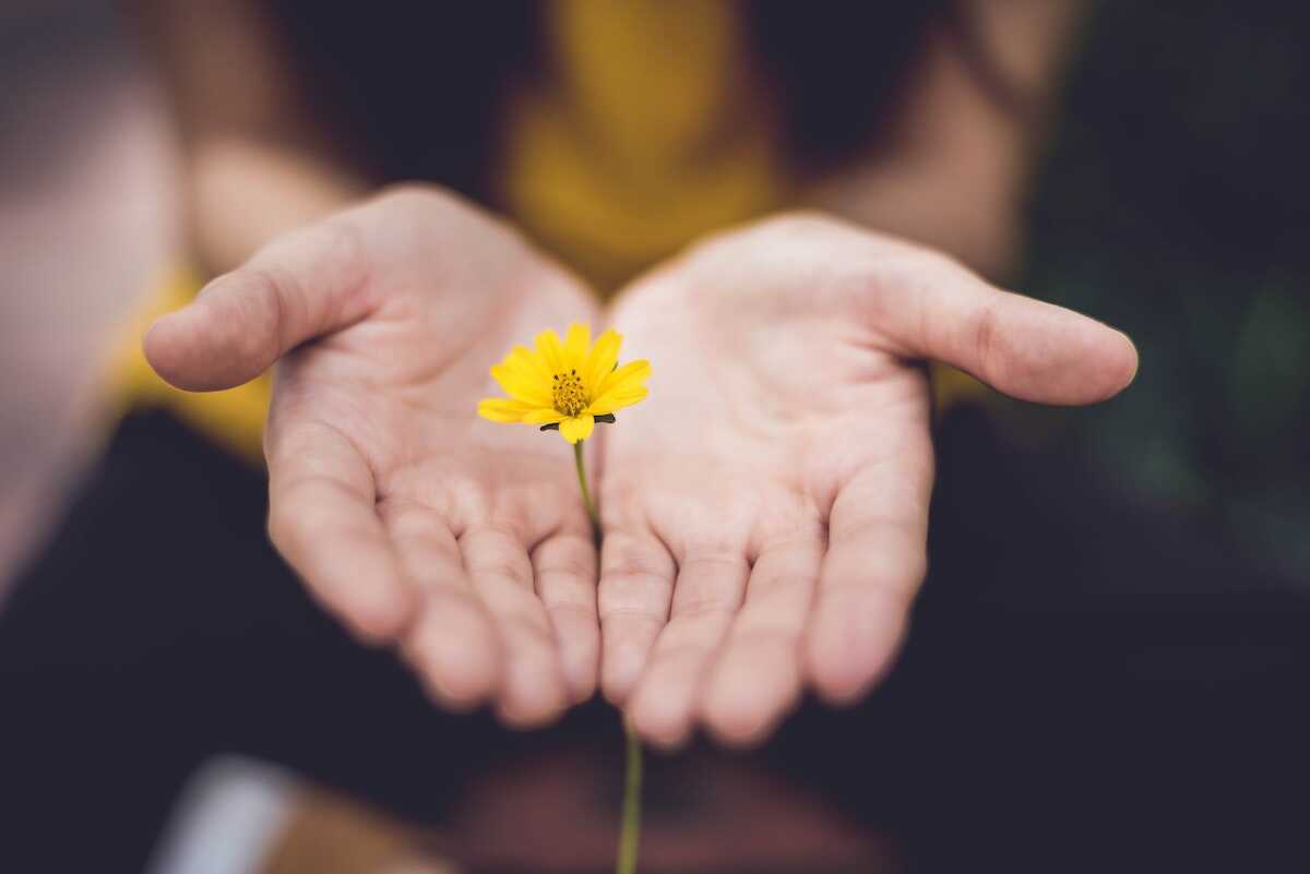 Hands holding out a yellow flower