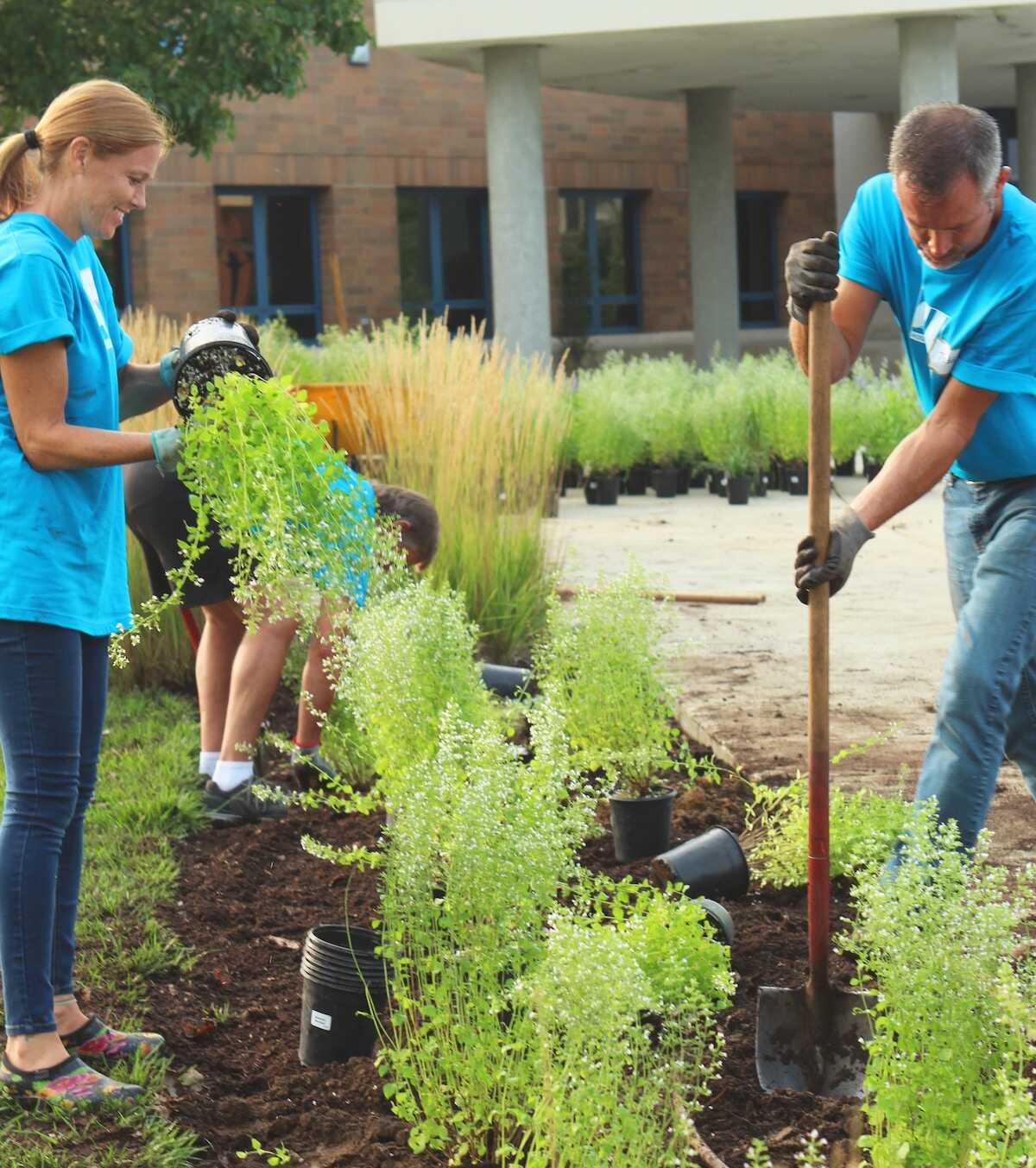 Volunteers in blue t-shirts planting a garden