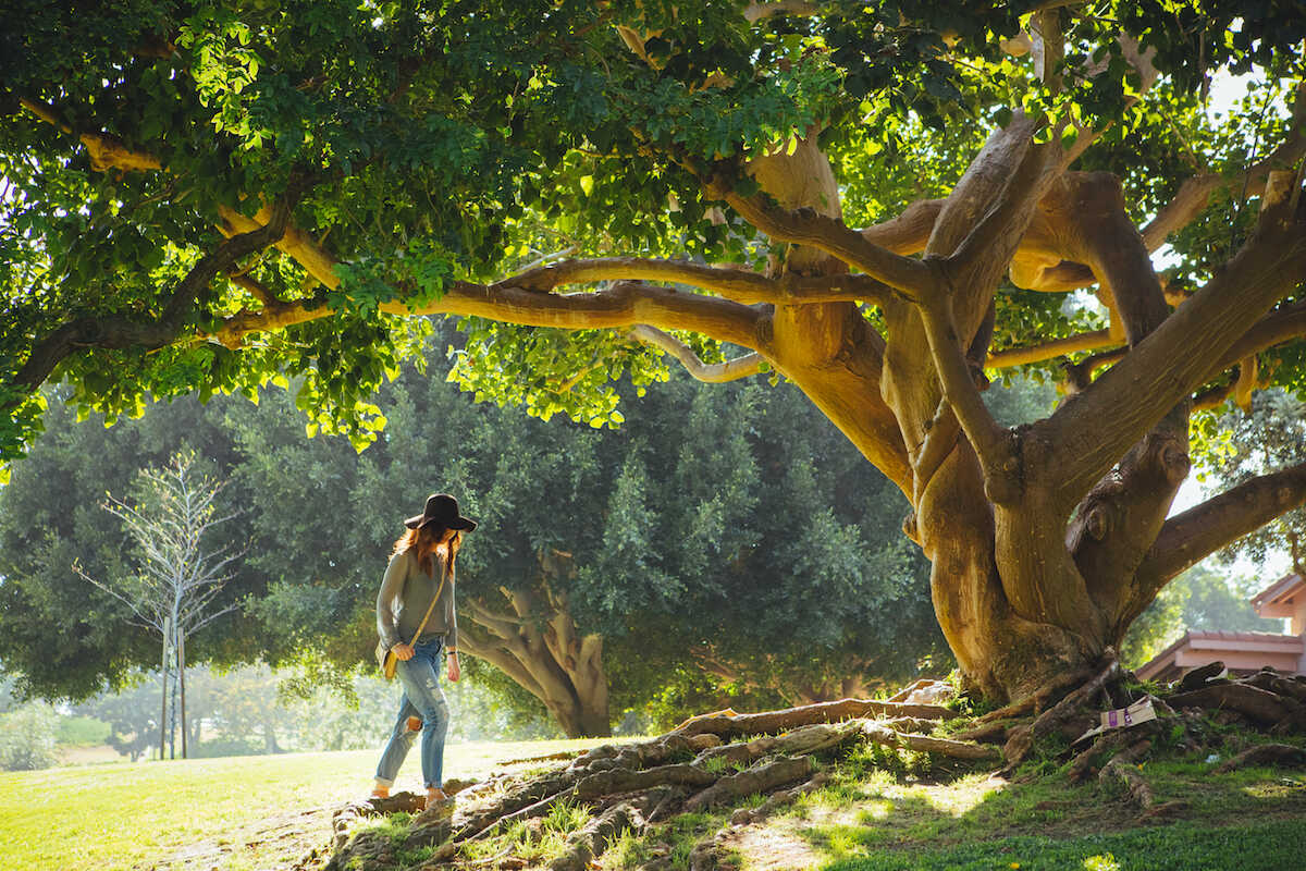 Young woman in jeans walking up to a tree